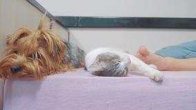 Kot i pies śpimy wpólnie śmiesznego wideo kota i psa przyjaźń indoors dosypianie przy cieki styl życia zdjęcie wideo