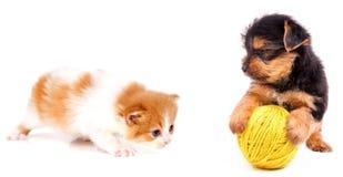Kot i pies Fotografia Stock