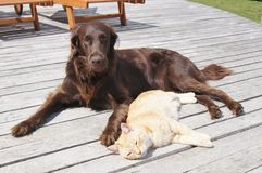 Kot i pies Zdjęcie Stock
