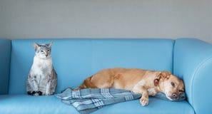 Kot i pies Zdjęcia Stock