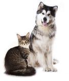 Kot i pies Zdjęcia Royalty Free