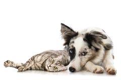 Kot i pies Obrazy Royalty Free