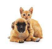 Kot i pies Obraz Stock