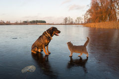Kot i pies na lodzie Zdjęcia Royalty Free