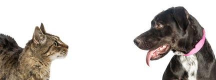 Kot i pies Patrzeje Each Innego sieć sztandar zdjęcia stock