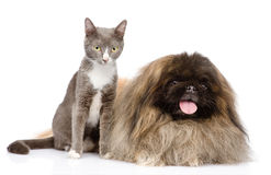 Kot i Psi pozować pojedynczy białe tło Obraz Royalty Free