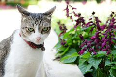 Kot i purpura kwiat Zdjęcia Royalty Free