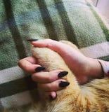 Kot I ręka zdjęcie stock
