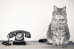 Kot i retro telefon Obrazy Royalty Free