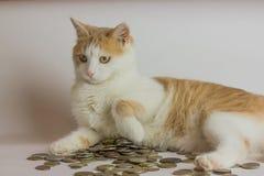 Kot i rozsypisko monety przeciw bielowi Obraz Royalty Free