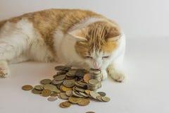 Kot i rozsypisko monety przeciw bielowi Zdjęcia Stock