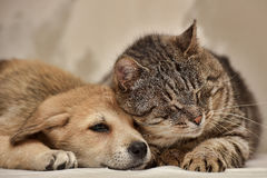 Kot i szczeniak zdjęcie stock