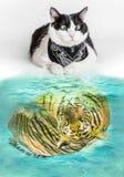 Kot i tygrys Zdjęcia Stock