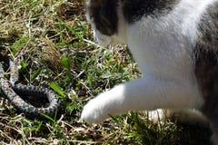 Kot i wąż Zdjęcia Royalty Free