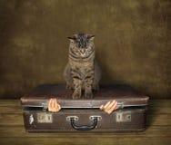 Kot 1 i walizka fotografia stock