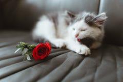 Kot i wzrastał na kanapie Zdjęcia Stock