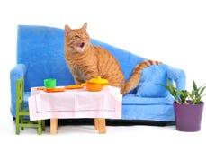 kot ja oblizanie posiłek Obraz Stock