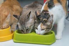 Kot je jedzenie w ranku fotografia royalty free