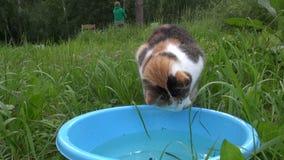 Kot je ryba od błękitnego pucharu i kobiety połowu w tle zbiory wideo