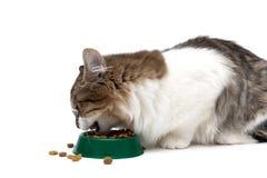Kot je suchego jedzenie od pucharu na białym tle Zdjęcia Royalty Free