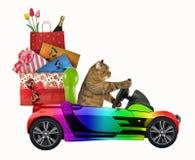 Kot jedzie samochód z Bożenarodzeniowymi zabawkami 2 fotografia stock