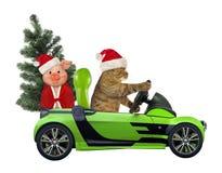 Kot jedzie samochód z drzewem i świnią royalty ilustracja