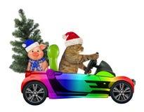 Kot jedzie samochód z drzewem 2 i świnią zdjęcie royalty free