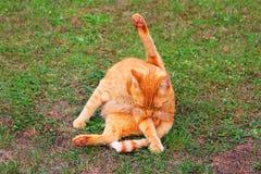 kot jest czyste Fotografia Royalty Free