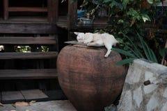 Kot jest odpoczynkowy zdjęcie stock