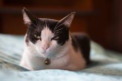 Kot jest półsenny obraz stock