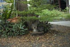 Kot jest spoczynkowy pod drzewem Fotografia Royalty Free