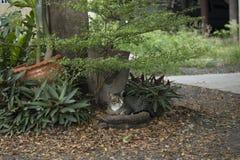 Kot jest spoczynkowy pod drzewem Obraz Royalty Free