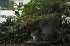 Kot jest spoczynkowy pod drzewem Obrazy Royalty Free
