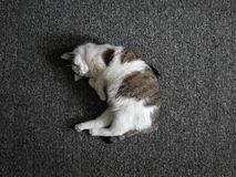 Kot jest uśpiony obraz stock