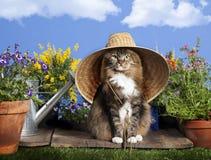 Kot Jest ubranym ogrodnictwo kapelusz Zdjęcia Royalty Free