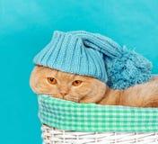 Kot jest ubranym trykotową nakrętkę Fotografia Royalty Free