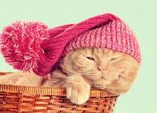 Kot jest ubranym trykotowego kapelusz Fotografia Royalty Free