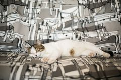 Kot kłaść i śpi na leżanka zamazującym tle zdjęcia royalty free
