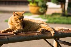 Kot Kłaść na ławce Obraz Stock