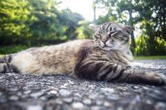 Kot kłaść na drodze z ładnym tło kolorem Zdjęcia Stock