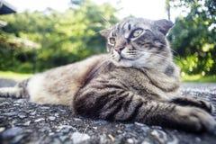 Kot kłaść na drodze z ładnym tło kolorem Obraz Royalty Free