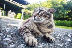 Kot kłaść na drodze z ładnym tło kolorem Zdjęcie Stock