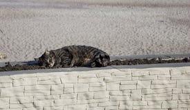 Kot kłaść na flowerbed Obrazy Royalty Free