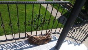 Kot kłaść na ganeczku na słonecznym dniu fotografia stock