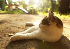 Kot kłaść na lato sjesty zakończeniu w górę plenerowej fotografii Zdjęcia Stock