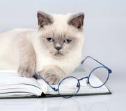 Kot kłama na książce z dużymi szkłami Zdjęcia Stock