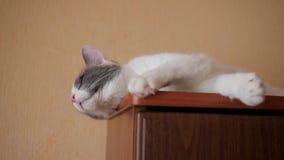 Kot kłama na szafie zbiory