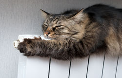 Kot kłama ciepłego grzejnika Obraz Royalty Free