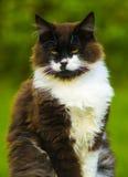 kot kamery kota target1165_0_ czarnego kota, zielone oczy Zdjęcie Royalty Free