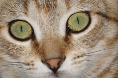 Kot, koty, kiciunia zdjęcie stock